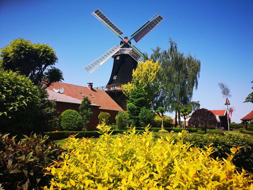 Mühlen in Ostfriesland, Mühle Rhaude